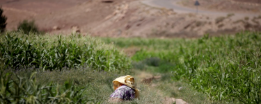 Someone in bright clothing working on their knees in a green field, with their head covered by fabric. Credit: Ali Aznague